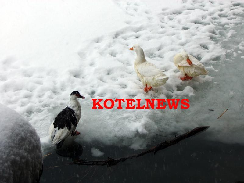 kotel-bogoyavlenie-2017-f