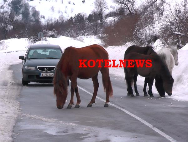 kotel kone na patya 1a